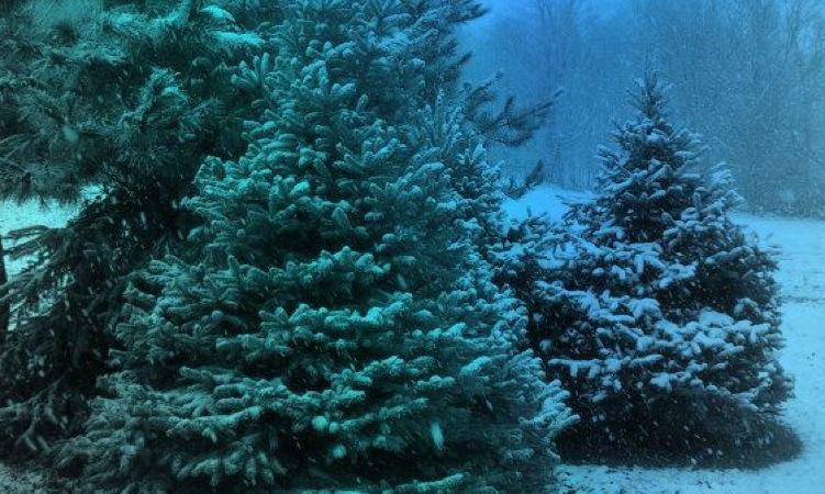 Feliz Natal e um excelente 2010